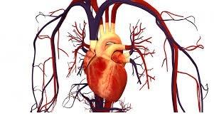 علوم هفتم فصل 14 دستگاه گردش مواد قلب