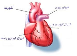 علوم هفتم فصل 14 دستگاه گردش مواد رگ های قلب