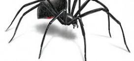 قدرت شنوایی عنکبوتها بیش از حد تصور است