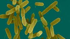 اولین خانواده جدید باکتریایی در کشور