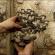 فسیل قارچ ۱۱۵ میلیون ساله کشف شد