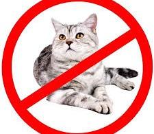 """ارتباط بین """"انگل گربه"""" و بیماریهای عصبی و سرطان"""