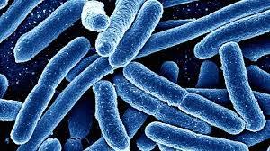 باکتریهای مقاوم