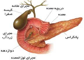 پانکراس یا لورالمعده تولید کننده هورمون انسولین