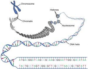 بخش های DNA