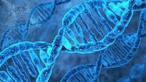 ژن ها دارای اطلاعات و دستورالعمل هایی برای تولید کدام مولکول هستند علوم هشتم