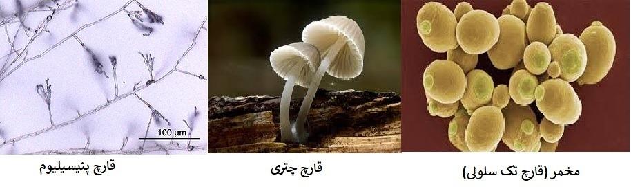 علوم نهم فصل 11 : گوناگونی جانداران قارچ