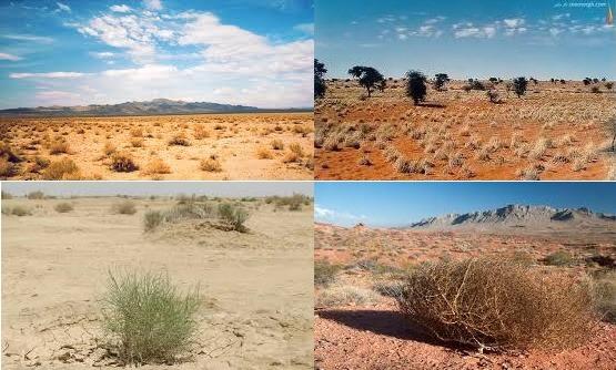 مناطق گرم و خشک