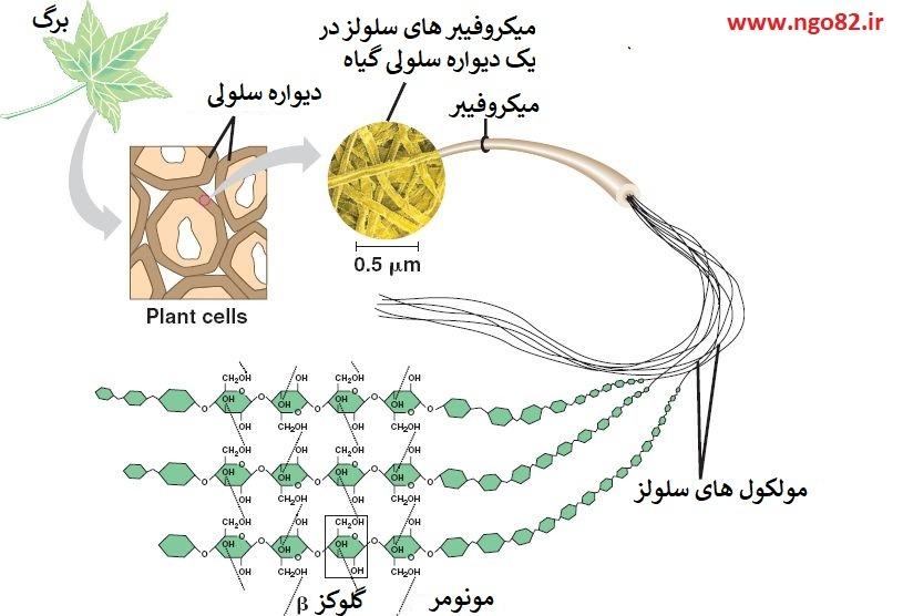 ساختمان سلولز در گیاهان