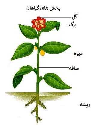 بخش های گیاهان