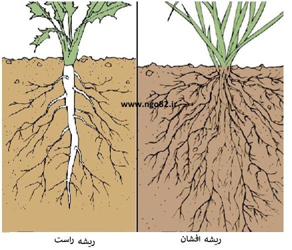 انواع ریشه در گیاهان