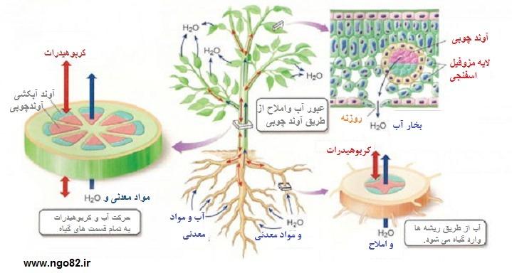 عملکرد اندام ها در گیاهان