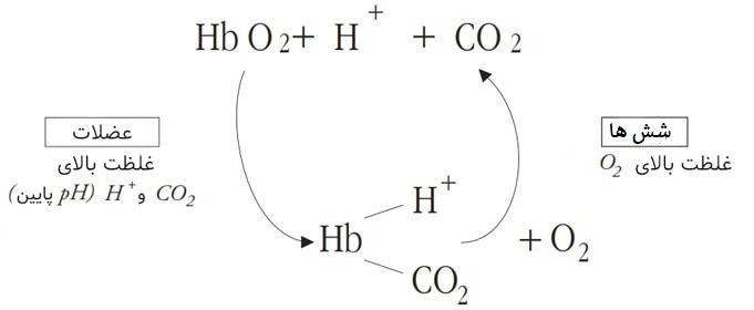 گلبول های قرمز و همگلوبین و کربن دی اکسید