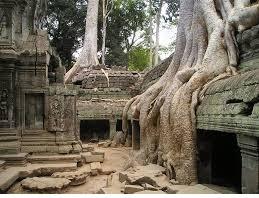 علوم هشتم فصل 13 : هوازدگی و ریشه درختان