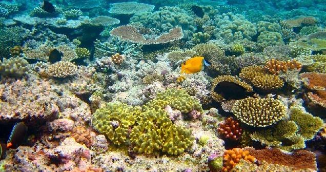 علوم نهم فصل 13 : جانوران بی مهره : مرجان ها