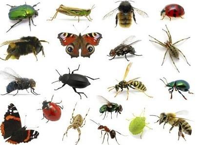 علوم نهم فصل 13 : جانوران بی مهره : انواع حشرات