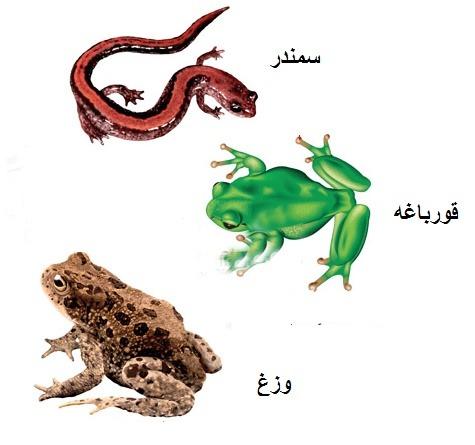 علوم نهم فصل 14 : جانوران مهره دار دوزیستان: