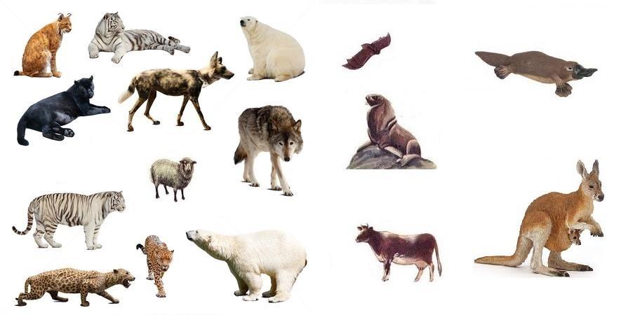 پستانداران (شیرخواران)