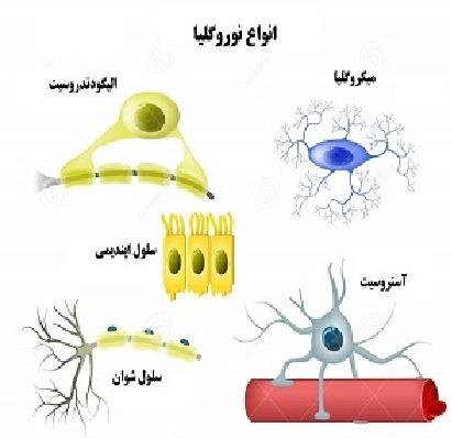 سلول های پشتیبان