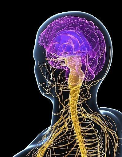 pdf پاسخ فعالیت های فصل 4 علوم هشتم دستگاه عصبی