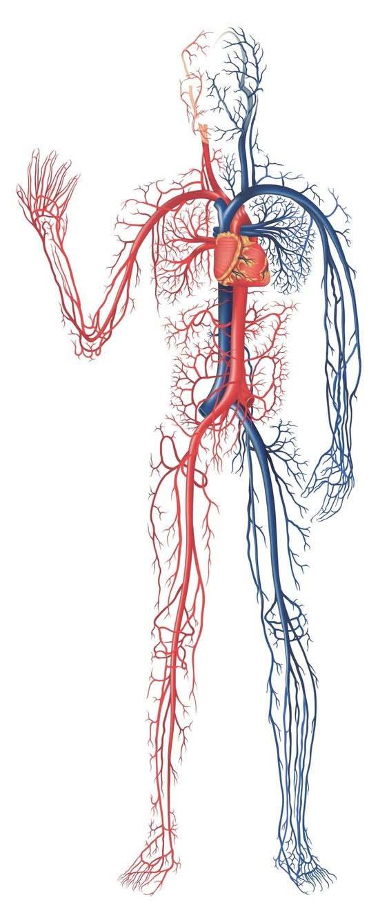 PDF نمونه سوال علوم هفتم با پاسخ نامه فصل 14 دستگاه گردش خون